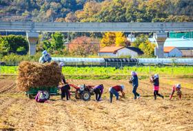 김상석(가을걷이)