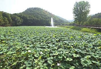 최미숙(운암지 수변공원)