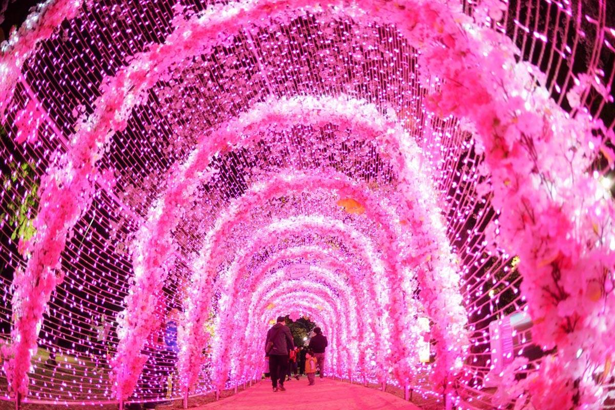 정철재(벚꽃터널)
